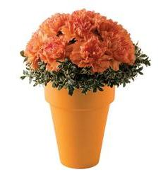 Teleflora's Renoir Orange Bouquet (05N800B)
