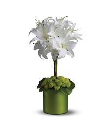 White Lily Topiary (08N550B)