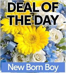 Fresh Baby Boy Flowers (NBB-DEAL1)