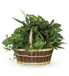 Large Basket Garden (T212-1A)