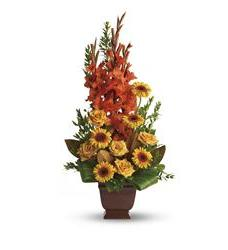 Teleflora's Sentimental Dreams (T244-1A)