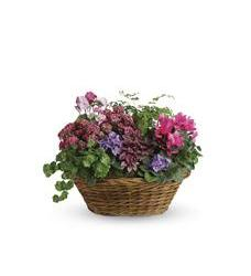 Simply Chic Mixed Plant Basket (T97-1A)