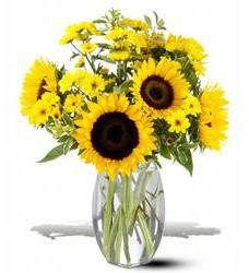 Teleflora's Sunflower Splash