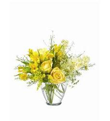 Teleflora's Delicate Yellow (TF-WEB18)
