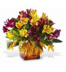 Teleflora's Autumn Alstroemeria Bouquet (TF-WEB30)
