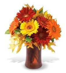 Autumn Gerberas (TF-WEB43)