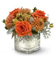 Teleflora's Perfect Orange Harmony (TF-WEB5)