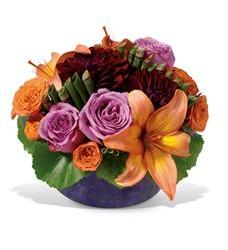 Contempo Mix (TF-WEB60)