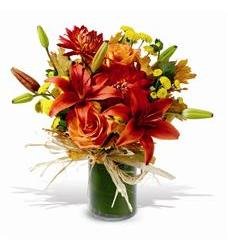 Orange Zest (TF-WEB68)