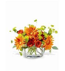 Teleflora's Fiery Fun (TF-WEB69)