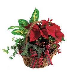 Holiday Planter Basket (TF102-1)