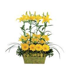 Yellow Garden Rows (TF147-2)