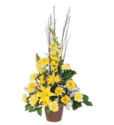 Brighter Blessings Arrangement  (TF211-3)