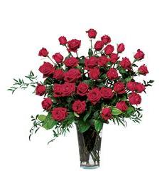 Three Dozen Red Roses (TF30-1)