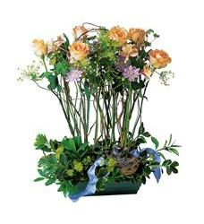 Rose Topiary (TF35-3)