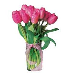 Pink Tulips (TF52-1)