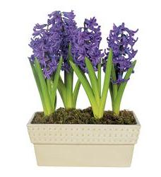 Hyacinth Planter (TF61-2)