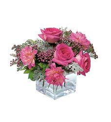 Perfect Pink Harmony (TF68-1)