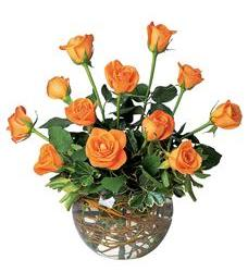 A Dozen Orange Roses (TF77-1)