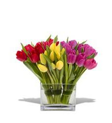 Teleflora's Tulips Together (TFWEB129)