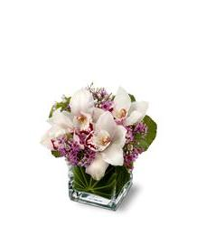 Teleflora's Lovely Orchids (TFWEB144)