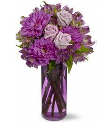 Moonlight Sonata (TFWEB176)