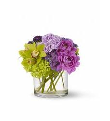 Watercolor Beauty (TFWEB183)