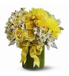 Lemon Aid (TFWEB319)