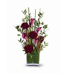 Callas in the Grass (TFWEB385)