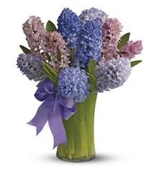 Fragrant Hyacinth (TFWEB526)