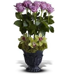 Teleflora's Heavenly Grace (TFWEB539)
