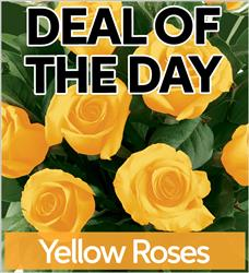 Yellow Roses - YLWR-DEAL1 (38.95)