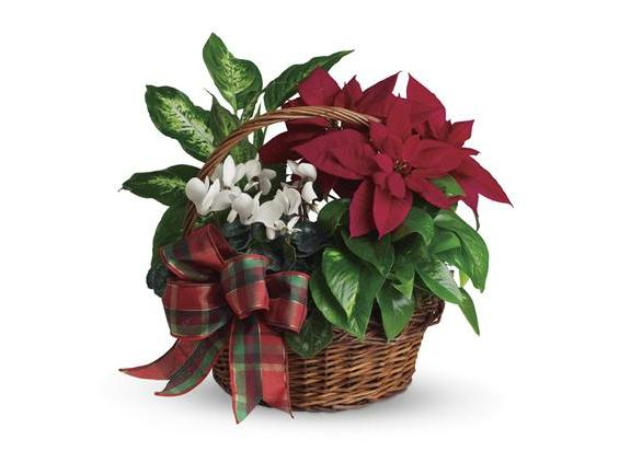 Holiday Homecoming Basket (T123-2A)