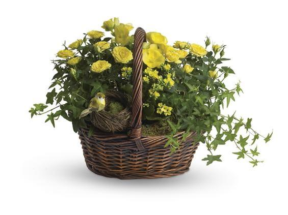 Yellow Trio Basket (T94-1A)