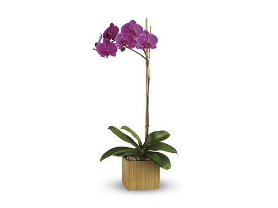 Teleflora's Imperial Purple Orchid (T98-1A)