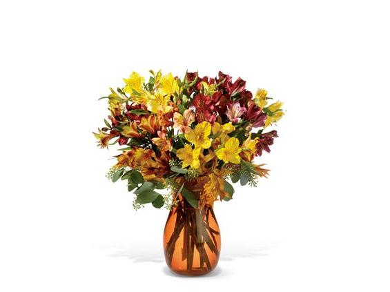 Alstroemeria Brights (TF-WEB61)