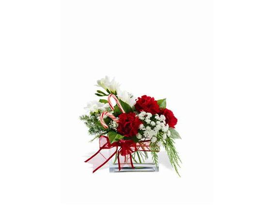 Teleflora's Peppermint Twist (TF-WEB89)