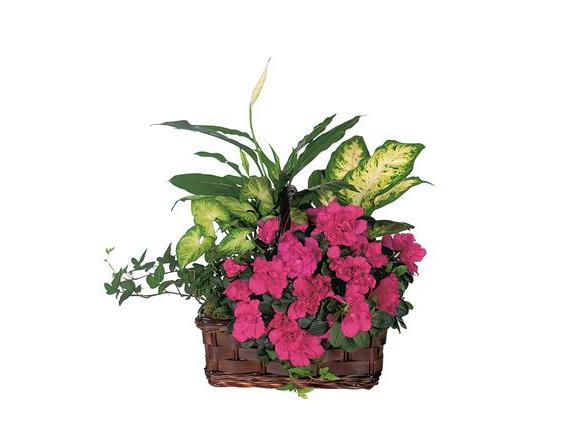 Azalea Attraction Garden Basket (TF126-1)