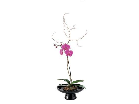 Standard Orchid in Large Bowl  (TF219-6)