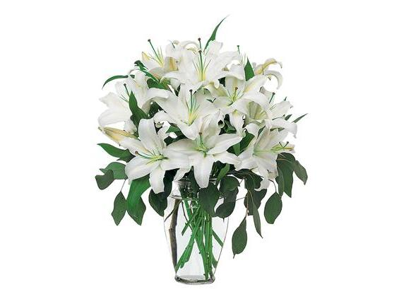 Perfect White Lilies (TF24-1)