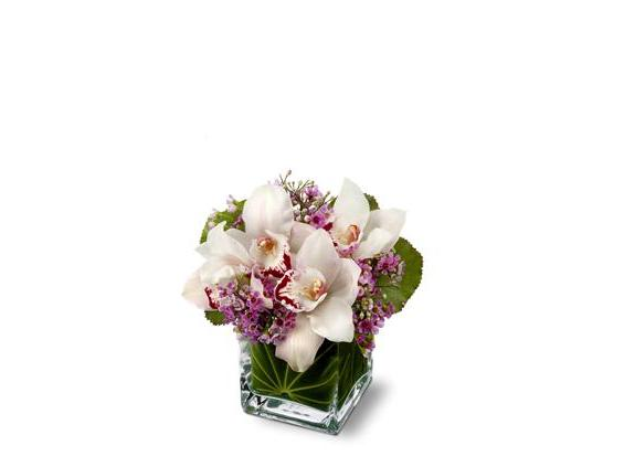 Teleflora's Lovely Orchids