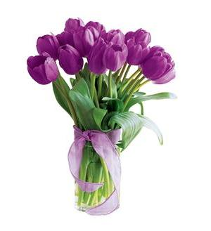 Spring Tulips- Deluxe Purple (20TPUR)