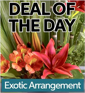 Exotic Arrangement (EA-DEAL1)