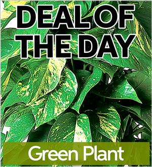 Green Plant (GP-DEAL1)