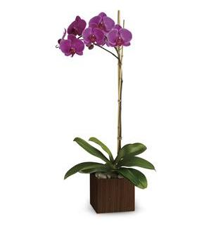 Teleflora's Sublime Orchid (TEV23-6A)