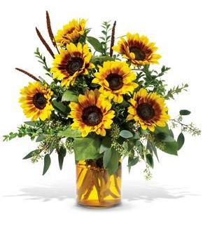 sunrise sunflowers tf web40 64 76