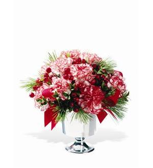 Peppermint Carnations (TF-WEB75)