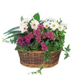 Traditional European Garden Basket (TF127-1)