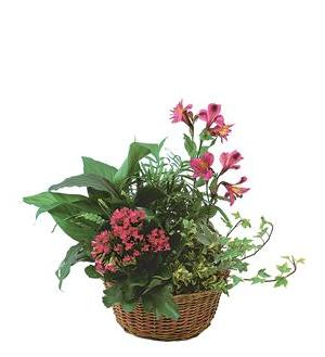 dish garden with pinks tf139 3 - Dish Garden Plants