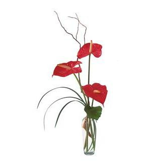 The Simplicity of Anthuriums (TF148-2)